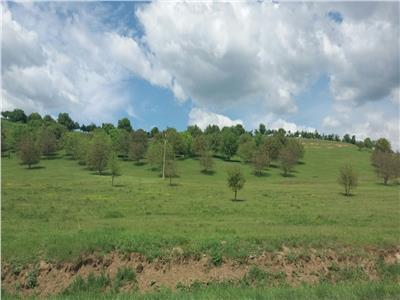 Land for Sale in Berghia Area