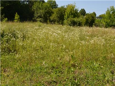 Land for Sale in Sanisor Area
